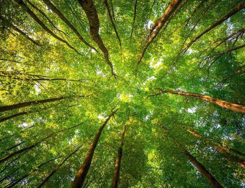 Training Environmental Audit ISO 14001