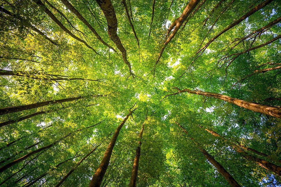 Pelatihan Environmental Audit ISO 14001